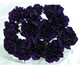 20 Fresh-cut Purple Moonvista Carnations (Purple Flowers)