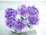 20 Fresh-cut Lavender Moonaqua Carnations (Purple Flowers)