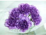 20 Fresh-cut Purple Moonlite Carnations (Purple Flowers)