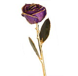 Gold-Trimmed Preserved Purple Rose (Real Rose!)