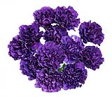 40 Fresh-cut Purple Moonshade Carnations (Purple Flowers)
