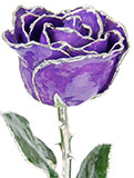 Silver-Trimmed Preserved Purple Rose (Real Rose!)