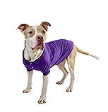 Purple Polo Shirt for Dogs