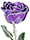 Silver-Trimmed Purple Rose (Real Rose!)