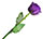 Purple Rose with Green Stem - Real Rose!