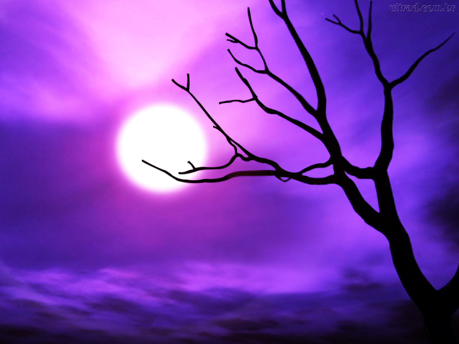 spooky halloween tree the purple store s purple blog